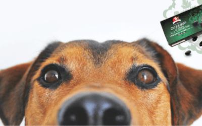 Probiootikumid lemmikloomale – ei või jaa?