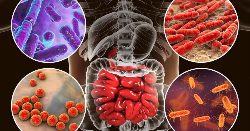 Sinu mikrobioomi tervis = Sinu tervis – kuidas seda hoida?