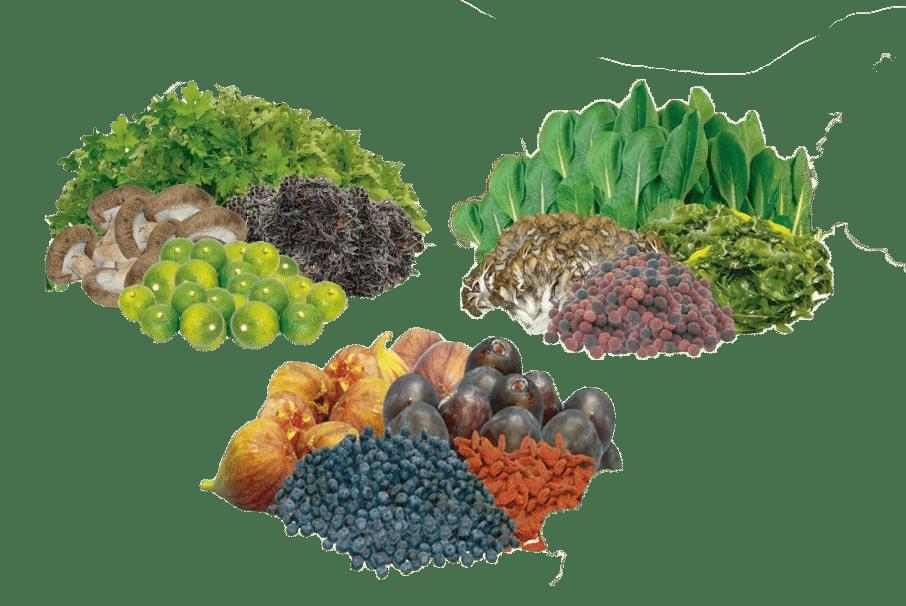 Dr.Ohhira probiootilised toidulisandid -probiootikum