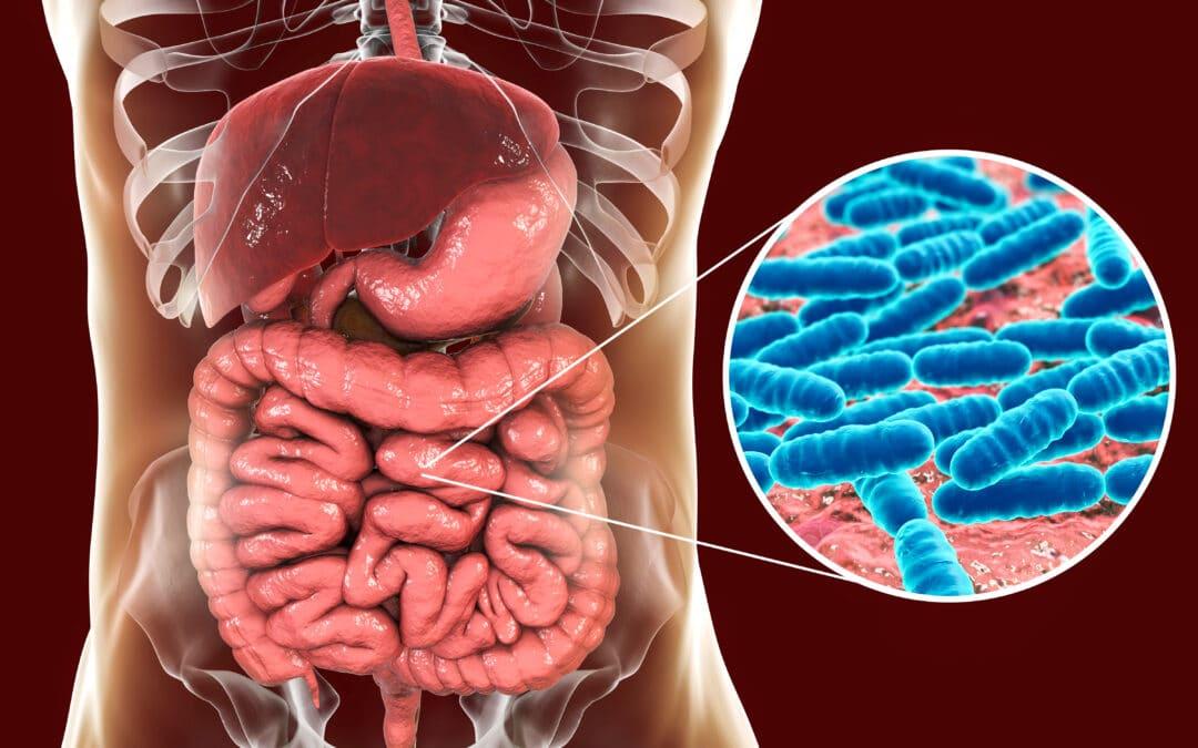 Bakterite roll meie kehas ja mida näitab mikrobioomi analüüs?