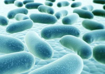 Dr.Ohhira probiootikumide tootmine.